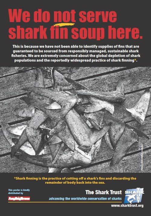 Angling Times Joins Campaign Against Shark Finning